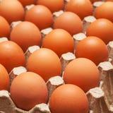 Τα καφετιά αυγά κοτόπουλου βρίσκονται σε έναν δίσκο χαρτονιού Στοκ Φωτογραφία