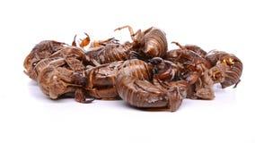 Τα κινεζικά χορτάρια πλάγιας όψης Cicadae Periostracum ή Cicada Slough σταματούν και περιστρέφονται στο λευκό απόθεμα βίντεο