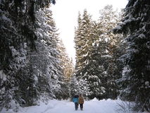 Τα κορίτσια περπατούν στο χειμερινό ξύλο Στοκ Φωτογραφίες