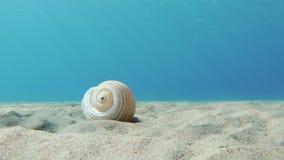 Τα κοχύλια ανήκουν στη θάλασσα