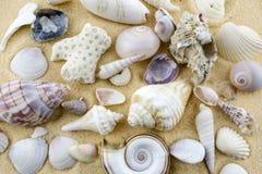 Τα κοχύλια στο σωρό άμμου Α των ανάμεικτων κενών κοχυλιών διασκόρπισαν στην άμμο Στοκ Φωτογραφίες