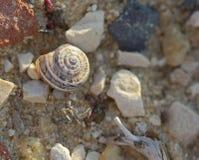Τα κοχύλια σαλιγκαριών που βάζουν στις πέτρες το μακρο πυροβολισμό Στοκ φωτογραφία με δικαίωμα ελεύθερης χρήσης