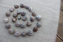 Τα κοχύλια των σαλιγκαριών σε ένα ύφασμα λινού Στοκ Εικόνες