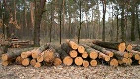 Τα κούτσουρα βρίσκονται στο έδαφος στο δάσος απόθεμα βίντεο