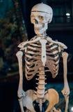 Τα κρανία και οι σκελετοί φαίνονται συγκλονίζοντας στοκ φωτογραφίες με δικαίωμα ελεύθερης χρήσης