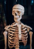 Τα κρανία και οι σκελετοί φαίνονται συγκλονίζοντας στοκ εικόνα με δικαίωμα ελεύθερης χρήσης