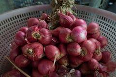 Τα κρεμμύδια ή τα κόκκινα κρεμμύδια είναι δημοφιλή για τα ταϊλανδικά τρόφιμα στοκ εικόνα