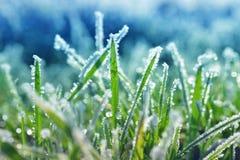 Τα κρύσταλλα πάγου στην πράσινη χλόη κλείνουν επάνω Στοκ Φωτογραφίες