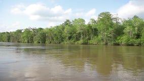 Τα κτήρια και το έλος νησιών μελιού περιοδεύουν με το δάσος και το δέντρο ζουγκλών στη Νέα Ορλεάνη, Λουιζιάνα απόθεμα βίντεο