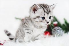 Τα κυνήγια γατακιών Χριστούγεννα γατακιών Χριστουγέννων Στοκ φωτογραφία με δικαίωμα ελεύθερης χρήσης