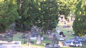 Τα κωνοφόρα έχουν αυξηθεί από τους κώνους πεύκων διακοσμώντας τους τάφους φιλμ μικρού μήκους