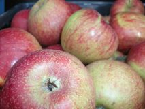 Τα κόκκινα, κίτρινα και πράσινα μήλα η σύσταση υποβάθρου Φρούτα βιασμών Παραγωγή της Apple Στοκ Εικόνες