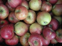 Τα κόκκινα, κίτρινα και πράσινα μήλα η σύσταση υποβάθρου Φρούτα βιασμών Παραγωγή της Apple Στοκ Φωτογραφία