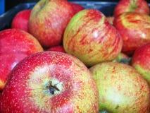 Τα κόκκινα, κίτρινα και πράσινα μήλα στο κιβώτιο Φρούτα βιασμών Παραγωγή της Apple Σύσταση υποβάθρου υποβάθρου Στοκ φωτογραφία με δικαίωμα ελεύθερης χρήσης