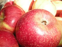 Τα κόκκινα, κίτρινα και πράσινα μήλα στο κιβώτιο Φρούτα βιασμών Παραγωγή της Apple παλαιό παράθυρο σύστασης λεπτομέρειας ανασκόπη Στοκ Εικόνες