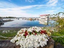 Τα κόκκινα και άσπρα λουλούδια διακοσμούν τον περίπατο παραλιών στο Sidney, Vanco Στοκ Φωτογραφίες