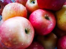 Τα κόκκινα και κίτρινα μήλα είναι το δέρμα της Apple Βλαστός με το phon Στοκ Εικόνες