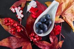 Τα κόκκινα, μπλε μούρα με το σφένδαμνο βγάζουν φύλλα τα άνθη που τακτοποιούνται σε ένα σκοτεινό πιάτο πλακών Στοκ Εικόνα