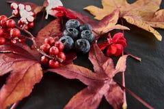 Τα κόκκινα, μπλε μούρα με το σφένδαμνο βγάζουν φύλλα τα άνθη που τακτοποιούνται σε ένα σκοτεινό πιάτο πλακών Στοκ Φωτογραφία