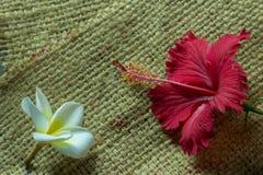 Τα κόκκινα λουλούδια έβαλαν τον άσπρο σάκο υποβάθρου λουλουδιών στοκ φωτογραφία με δικαίωμα ελεύθερης χρήσης