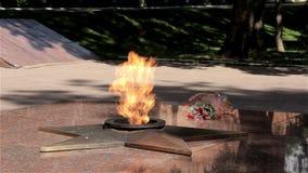 Τα κόκκινα λουλούδια βάζουν κοντά στην αιώνια πυρκαγιά στο Σμολένσκ απόθεμα βίντεο
