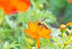 Τα κόκκινα λουλούδια και τα έντομα στο πάρκο Στοκ φωτογραφία με δικαίωμα ελεύθερης χρήσης