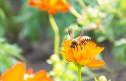 Τα κόκκινα λουλούδια και τα έντομα στο πάρκο Στοκ Εικόνες