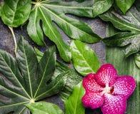 Τα κόκκινα λουλούδια ορχιδεών και τα υγρά τροπικά φύλλα με το νερό ρίχνουν τη ρύθμιση, υπόβαθρο φύσης Στοκ Εικόνες