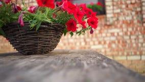 Τα κόκκινα λουλούδια flowerpot στο αγροτικό σπίτι, τα φύλλα ταλαντεύονται στον αέρα απόθεμα βίντεο