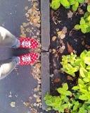 Τα κόκκινα παπούτσια πάνινων παπουτσιών κοριτσιών ` s γυναικών εφήβων με το άσπρο έδαφος ασφάλτου ποδιών τζιν σχεδίων σημείων αφή Στοκ εικόνες με δικαίωμα ελεύθερης χρήσης