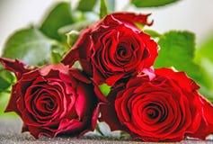 Τα κόκκινα τριαντάφυλλα στο ασημένιο υπόβαθρο κλείνουν επάνω στοκ εικόνες