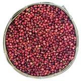 Τα κόκκινα φασόλια καφέ που ωριμάζουν στο καλάθι μπαμπού που περιέχει, επιλεγμένο κόκκινο ωριμάζουν arabica τα κεράσια μούρων καφ Στοκ φωτογραφία με δικαίωμα ελεύθερης χρήσης