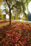 Τα κόκκινα φύλλα και ένα δέντρο Στοκ Φωτογραφία