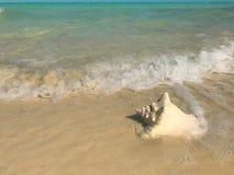 Τα κύματα πλένουν επάνω σε ένα κοχύλι conch σε μια παραλία στους Τούρκους και τα Caicos στοκ φωτογραφία με δικαίωμα ελεύθερης χρήσης