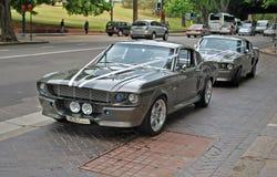 Τα κλασικά πρότυπα αυτοκινήτων του μάστανγκ GT500 της Shelby το 1967 σταθμεύουν σε μια οδό ως μέρος της γαμήλιας συνοδείας Στοκ Εικόνα