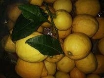 Τα λεμόνια στοκ φωτογραφίες