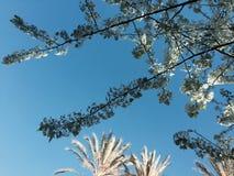 Τα λουλούδια ανωτέρω στοκ εικόνες