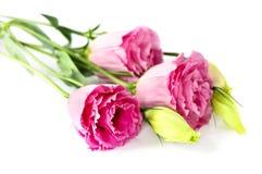 τα λουλούδια απομόνωσα&n στοκ φωτογραφία