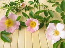 τα λουλούδια αυξήθηκαν άγρια περιοχές Στοκ Φωτογραφίες