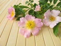 τα λουλούδια αυξήθηκαν άγρια περιοχές Στοκ Εικόνες