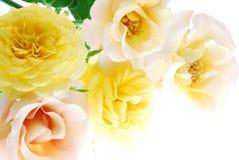 τα λουλούδια αυξήθηκαν Στοκ Φωτογραφίες