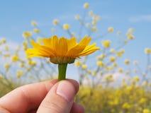τα λουλούδια δίνουν Στοκ εικόνα με δικαίωμα ελεύθερης χρήσης