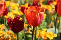 Τα λουλούδια είναι ένα σίγουρο σημάδι ότι η άνοιξη είναι εδώ στοκ εικόνα
