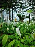 Τα λουλούδια είναι nature& x27 καλύτερος φίλος του s & x28 trees& x29  στοκ εικόνες