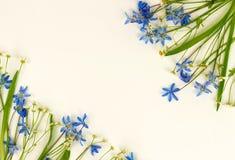 τα λουλούδια εμβλημάτων ανασκόπησης διαμορφώνουν λίγη ρόδινη σπείρα μπλε άνοιξη λουλουδιών Στοκ Εικόνα