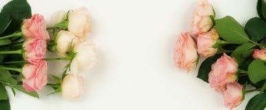 τα λουλούδια εμβλημάτων ανασκόπησης διαμορφώνουν λίγη ρόδινη σπείρα όμορφα ρόδινα τριαντάφυλλ&alp Στοκ Εικόνες