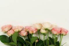 τα λουλούδια εμβλημάτων ανασκόπησης διαμορφώνουν λίγη ρόδινη σπείρα όμορφα ρόδινα τριαντάφυλλ&alp Στοκ φωτογραφία με δικαίωμα ελεύθερης χρήσης