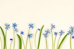 τα λουλούδια εμβλημάτων ανασκόπησης διαμορφώνουν λίγη ρόδινη σπείρα μπλε άνοιξη λουλουδιών Στοκ Εικόνες