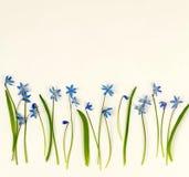 τα λουλούδια εμβλημάτων ανασκόπησης διαμορφώνουν λίγη ρόδινη σπείρα μπλε άνοιξη λουλουδιών Στοκ εικόνα με δικαίωμα ελεύθερης χρήσης