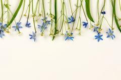 τα λουλούδια εμβλημάτων ανασκόπησης διαμορφώνουν λίγη ρόδινη σπείρα μπλε άνοιξη λουλουδιών Στοκ φωτογραφίες με δικαίωμα ελεύθερης χρήσης
